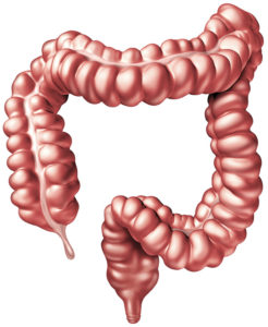 大腸・結腸・直腸について