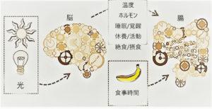 マイクリニック大久保名古屋 消化管のサーカディアンリズム-規則正しい生活の大切さ-